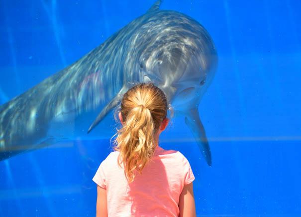 Legkedvesebb tengerlakók: a delfinek